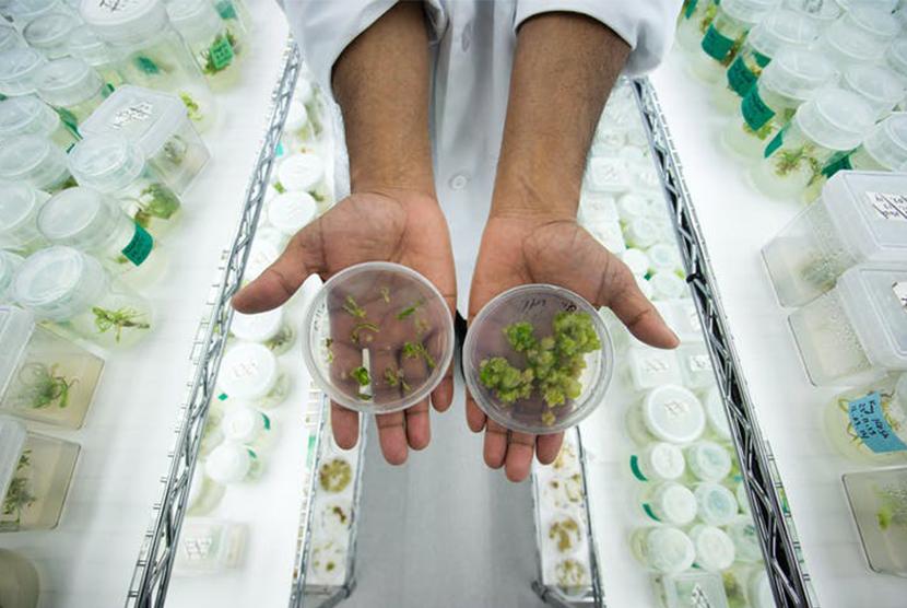 hands open holding green cannabis